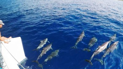 sailing with dolphins in Kona
