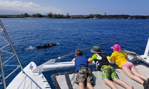 Kona dolphin watching